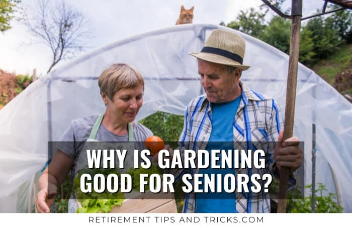 Why Is Gardening Good For Seniors